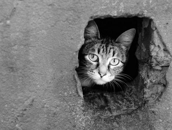 Чи пускати котів у підвали, вінничани вирішуватимуть на зборах